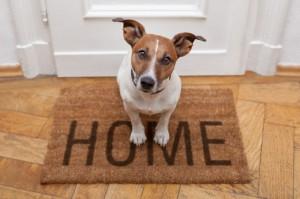 Pet Friendly Rental Home