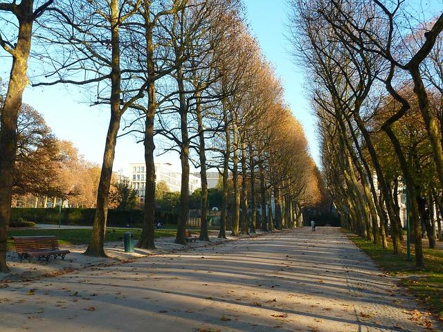 Enjoy Thanksgiving Day in Brussels, Belgium