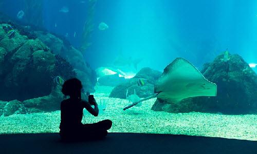Lisbon Oceanarium in Lisbon, Portugal